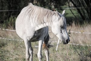 horse-908708_1920_2
